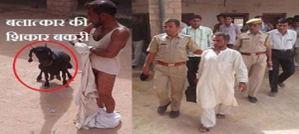 OMG: बकरी से रेप करते रंगेहाथों पकड़ा गया मदरसे का मौलवी...