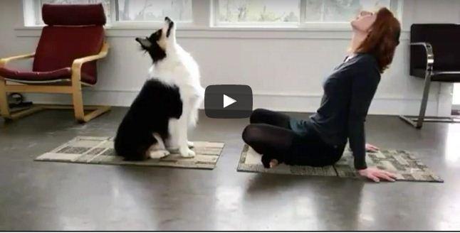 वीडियो वायरल, मालकिन की नकल करते-करते योग सीख गया यह कुत्ता