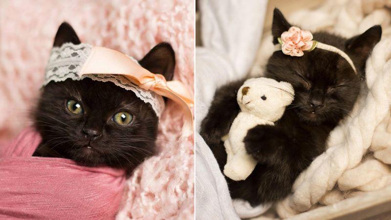 बेबी कैट का ऐसा फोटोशूट आपने कहीं भी नहीं देखा होगा