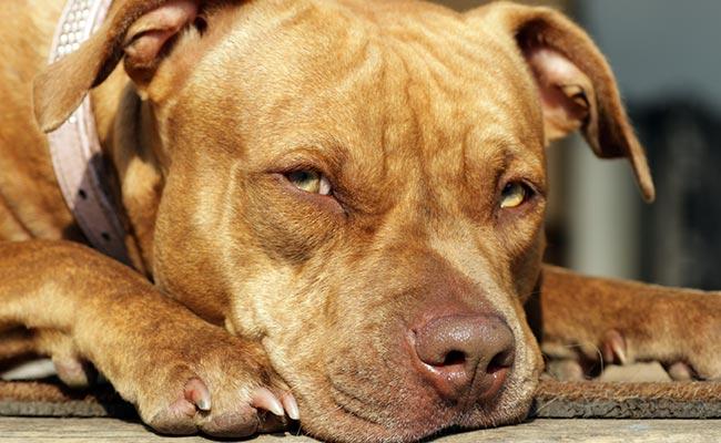 पाकिस्तान में इस कुत्ते को सुनाई गई