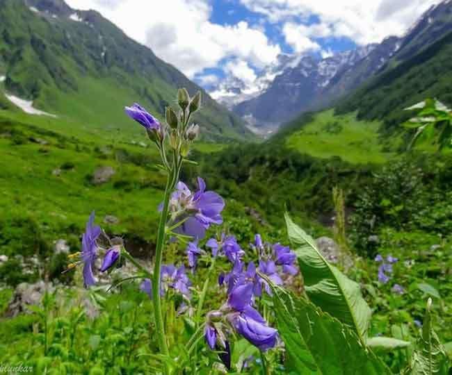 उत्तराखंड में पर्यटकों के लिए खुलेगी फूलों की घाटी