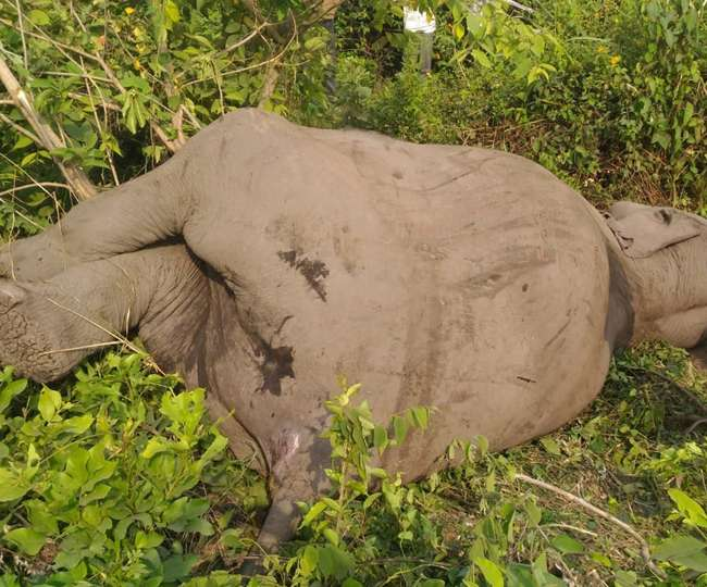 उत्तराखण्ड उधमसिंह नगर में रेलवे ट्रैक पर आया हाथी, टक्कर से हुई मौत