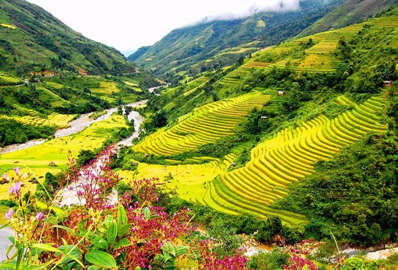 जानिए दुनिया के सबसे खूबसूरत चाय के बागानों के बारे में