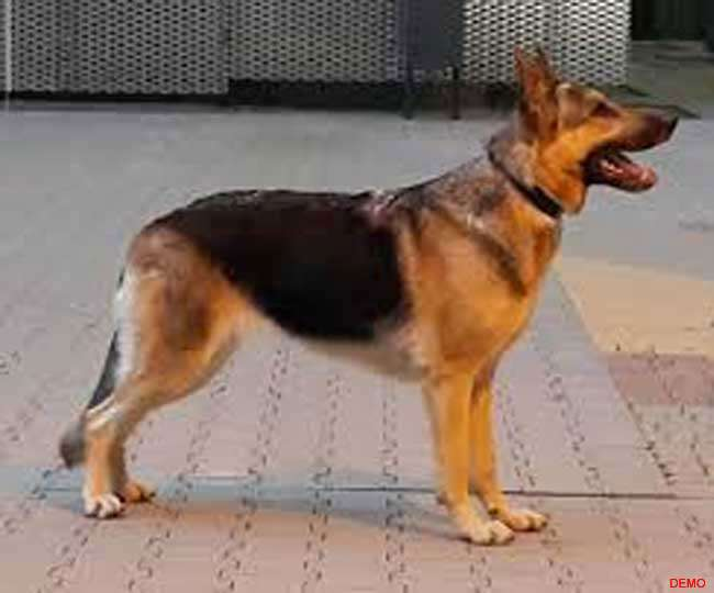 तो सिर्फ एक कुत्ते की तलाश में क्यों परेशान है पटना के होनहार पुलिस अधिकारी, जानें पूरा मामला