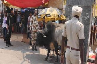 दुर्ग्याणा तीर्थ आए नवजोत सिद्धू पर अावारा सांड़ ने किया हमला, बाल-बाल बचे