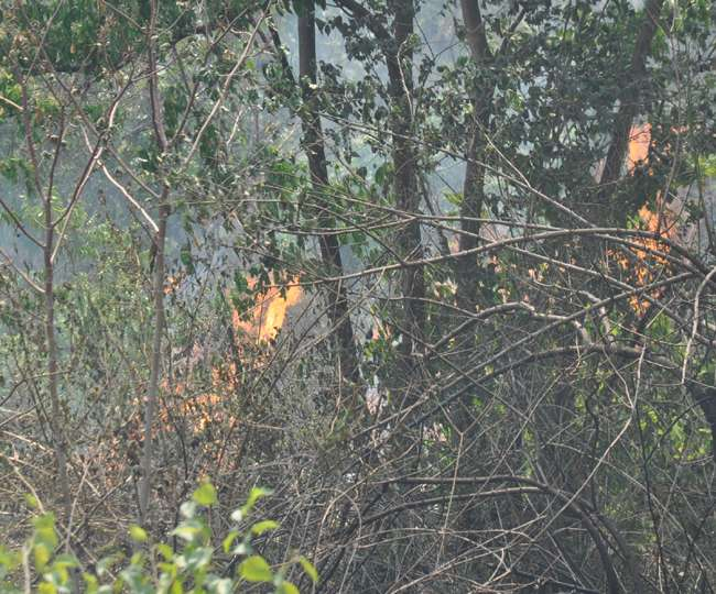 देहरादून में राष्ट्रपति के आशियाने के पास पहुँची जंगल की आग, मचा हडकंप