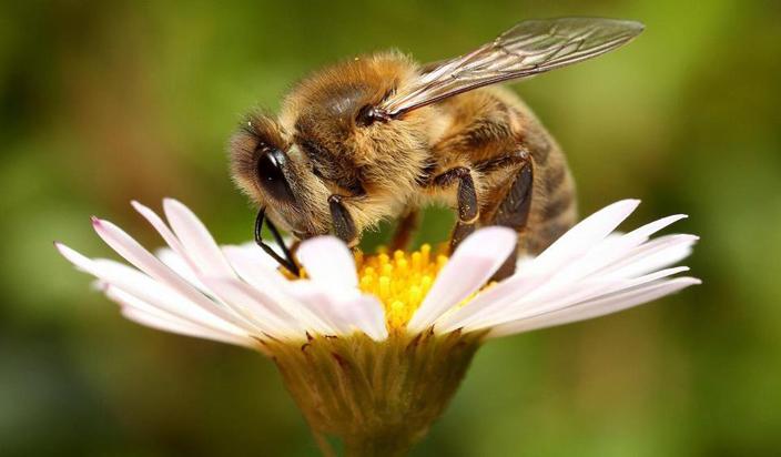 राजधानी लखनऊ समेत पूरे उत्तर प्रदेश में मनाया गया विश्व मधुमक्खी दिवस