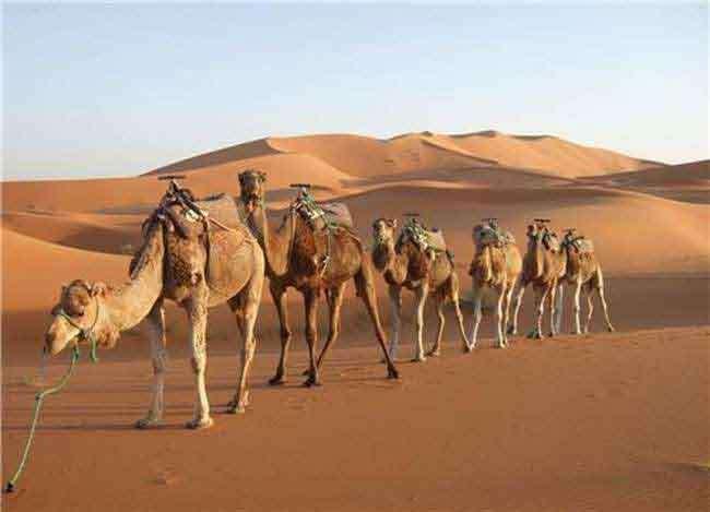 राजस्थान में गर्मी से हो रहा हाल-बेहाल, चल रही है तेज़ लू