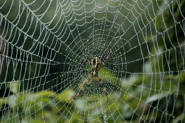 धार्मिक मान्यतानुसार: घर में मकड़ी का जाला माना जाता है अशुभ