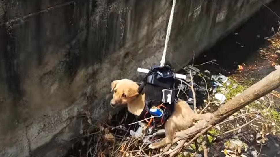 विडियो: 2 दिन से नाले में फंसा था कुत्ता, इस शख्स ने चंद घंटे में ड्रोन बनाकर बचाई जान