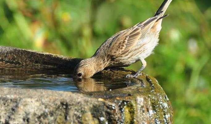 पशु -पक्षियों को पानी पिलाने से मिटते है व्यक्ति के ये पाप