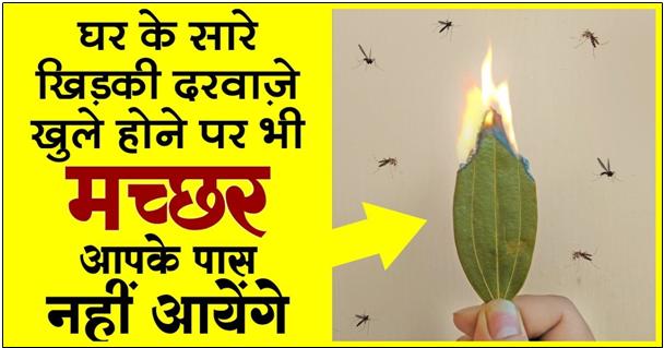ये है मच्छर मारने का सबसे बेहतर तरीका ! मात्र 1 मिनिट में पायें छुटकारा