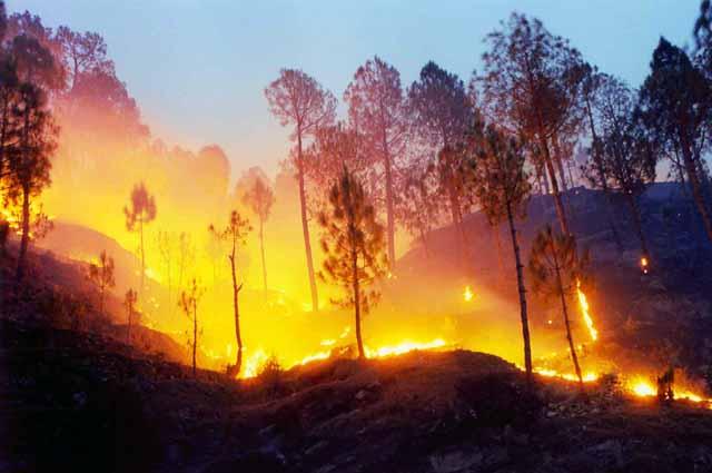 उत्तराखंड के जंगलो में लगी आग, वन विभाग लाचार