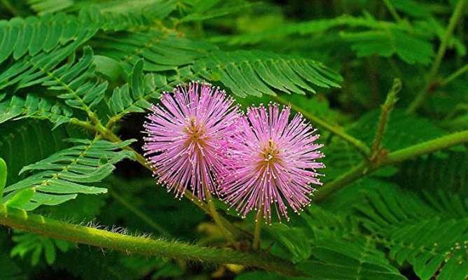 इस पौधे की पूजा से कम होता है शनिदेव का प्रकोप...