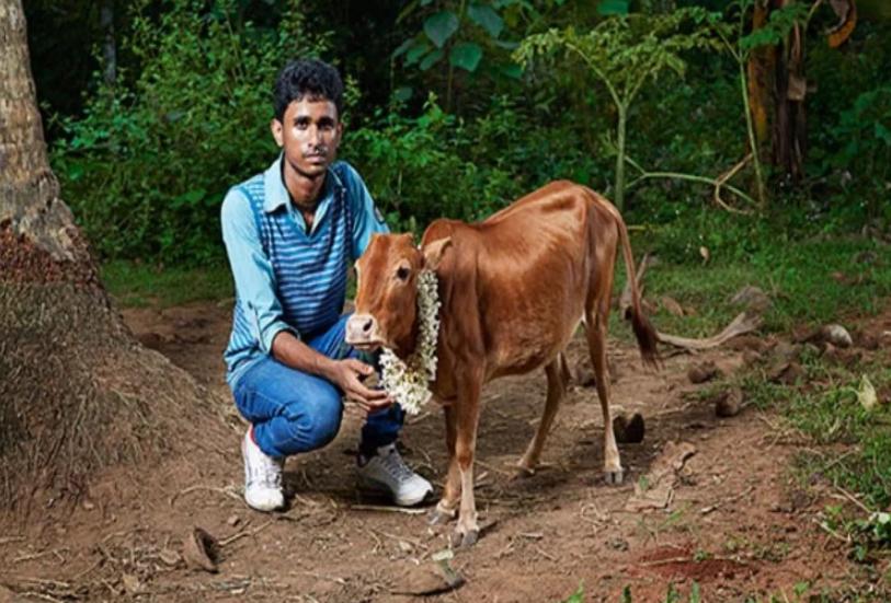 ये है दुनिया की सबसे छोटी गाय,देखकर भी आपकी आंखें को नहीं होगा यकीन