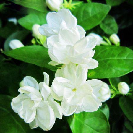 ये फूल जितना हैंखूबसूरत, उतना ही सेहत के लिए भी होते हैंफायदेमंद