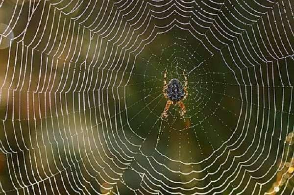 घर में मकड़ी का जाला माना जाता है अशुभ, हमेशा होती है धन की हानि
