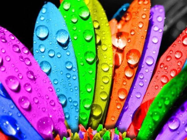 रंगों से भी बनती है बिगड़ी हुई तकदीर, जानिए कैसे