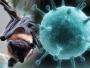 निपाह वायरस के फैलने की ये हैं वजह, जानिए आप भी...