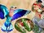 तो इसलिए खास होता हैं विजयदशमीपर नीलकंठ पक्षी औरतो इसलिए खास होता हैं विजयदशमीपर नीलकंठ पक्षी और कछुए को देखना कछुए को देखना