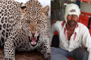 बहराइच: तेंदुए से दस मिनट तक लड़ता रहा किसान, बच गई जान
