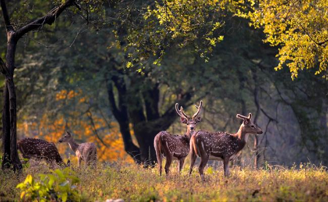 एशिया के सबसे खूबसूरत रिजर्व में शामिल है कान्हा नेशनल पार्क, जाकर जरुर देखें दुर्लभ जीव-जंतु