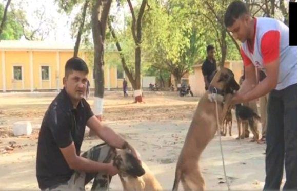 Photo of 'कुत्तों' के तबादले पर घिरी कमलनाथ सरकार, बीजेपी नेता बोले- इनको तो बख्श देते