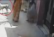 लॉकडाउन की ये घटना सुनकर रो पड़ेगे आप भूख से तड़प रही बच्चियों के लिए महिला ने कुत्ते को…