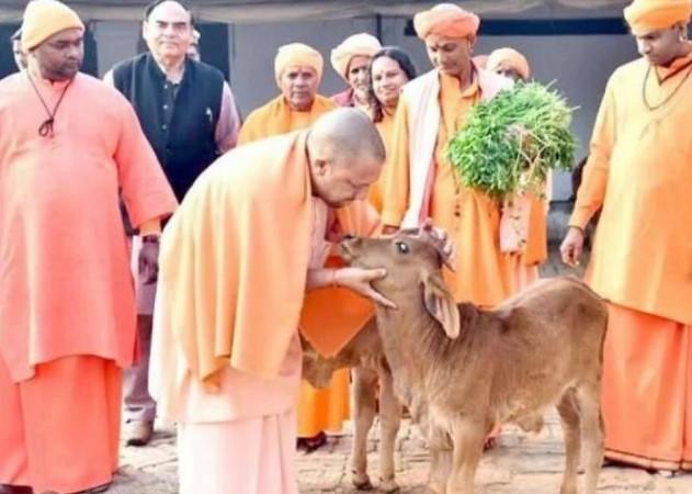 Photo of UP की योगी सरकार राज्य के बेसहारा गोवंश के लिए 16 जिलों में 20 गौ संरक्षण केंद्रों की करेगी स्थापना
