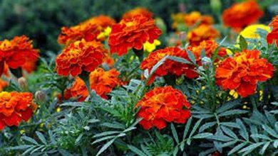Photo of फूलों से बनाएं नेचुरल हेयर कलर, नहीं होगा कोई साइड इफेक्ट