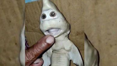 Photo of मछुआरे के जाल में फंसी यह अजीबोगरीब चीज, खरीदने वालों की लगी होड़…