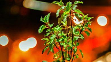 Photo of घर की इस जगह पर भूलकर भी ना रखें तुलसी का पौधा नहीं तो…