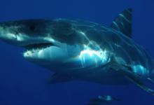 Photo of न्यूजीलैंड में मिला विश्व का सबसे बड़ा नीली चमक वाला समुद्री जीव