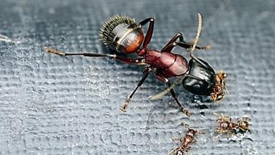 Photo of अगर आपको भी सपने में दिखाई चीटियां तो एक बार जरुर बढ़ ले मजेदार खबर…