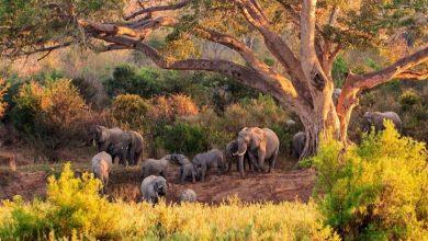 Photo of बेहद ही खूबसूरत है अफ्रीका के ये दो जगह