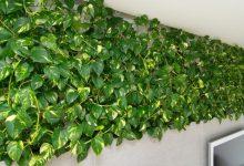 Photo of घर में लगाए ये 3 पौधे, होगी धन वर्षा…