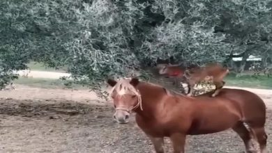 Photo of बकरी खाने के लिए खोजा गजब का जुगाड़, वीडियो देख सभी हो गये हैरान…