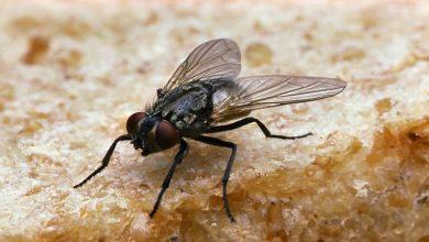 Photo of शख्स ने मक्खी को मारने के चक्कर में घर में ही आग लगा दी, पूरा मामला जानकर सभी हो गए हैरान…